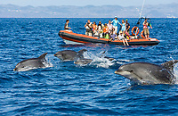 Tourists at Dolphin watching Tour, Tursiops truncatus, Azores, Atlantic Ocean, Portugal