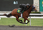 April 03, 2014: Hip 5 Elusive Quality - Michele Royale consigned by Secure Investments worked 1/8 in 10:1.  Candice Chavez/ESW/CSM