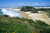 Torres, Rio Grande do Sul, Brazil. Few people on the beach; rocks and flowers, blue sky white sand.