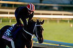 October 31, 2020: Vequist, trained by trainer Robert E. Reid Jr., exercises in preparation for the Breeders' Cup Juvenile Fillies at Keeneland Racetrack in Lexington, Kentucky on October 31, 2020. Scott Serio/Eclipse Sportswire/Breeders Cup/CSM