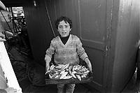 - unloading of the fish from a fishing boat in Mazara del Vallo port....- scarico del pesce da un peschereccio nel porto di Mazara del Vallo