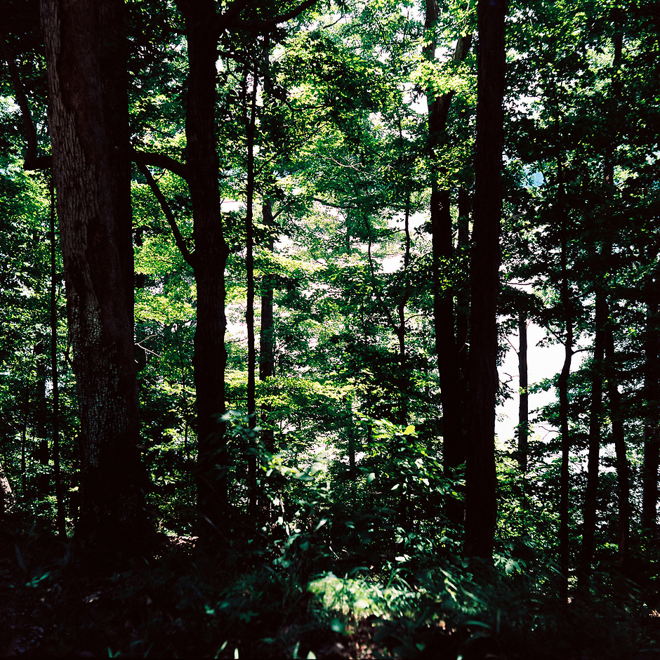 Lake Monroe is pictured through trees from the Sycamore Land Trust Amy Weingartner Branigin Peninsula Preserve near Bloomington, Indiana on Sunday, July 8, 2018. (Photo by James Brosher)