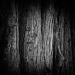 1.1.18 - Neighborhood Trees....
