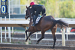 SHA TIN,HONG KONG-DECEMBER 08 : Roly Poly,trained by Aidan O'Brien,exercises in preparation for the Hong Kong Mile at Sha Tin Racecourse on December 8,2017 in Sha Tin,New Territories,Hong Kong (Photo by Kaz Ishida/Eclipse Sportswire/Getty Images)