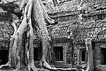 Ta Prohm Roots And Stone 01 - Silk-cotton tree roots on the NW side of Gopura III, Ta Prohm Temple, Angkor, Cambodia