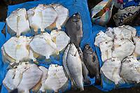 SENEGAL, Casamance, Ziguinchor, fishing port and fish market / Fischereihafen und Fischmarkt
