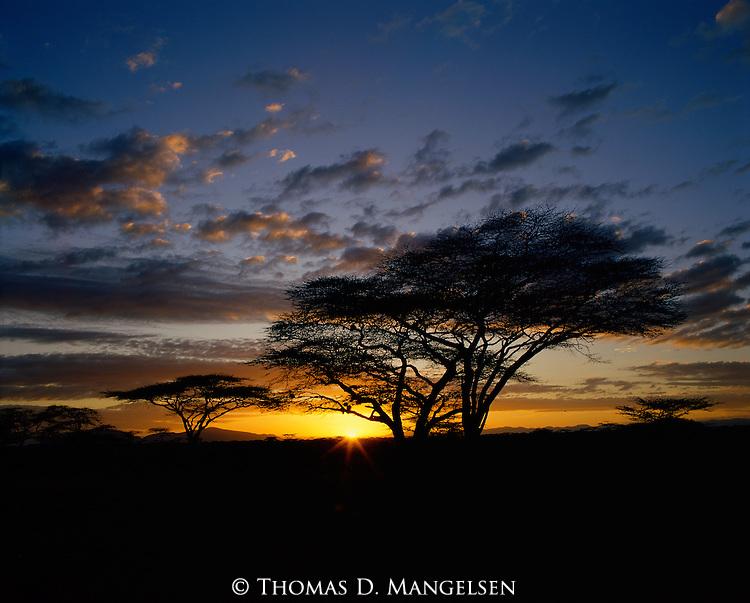 The sun rises above the horizon silhouetting acacia trees in Buffalo Springs, Kenya.