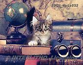 Xavier, ANIMALS, REALISTISCHE TIERE, ANIMALES REALISTICOS, cats, photos+++++,SPCHCATS852,#a#