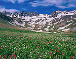 .  John leads wildflower photo tours into American Basin and throughout Colorado. All-year long.