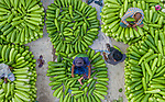 Vegetable sellers arrange huge piles of brightly coloured gourds at market.  The bottle gourds, which can grow to 2ft long and are used in dishes such as curries, are laid out to entice buyers who typically pay 50p for each.<br /> <br /> The market, in Jaypurhat, Bangladesh, was photographed by 29-year-old Abdul Momin.  SEE OUR COPY FOR DETAILS.<br /> <br /> Please byline: Abdul Momin/Solent News<br /> <br /> © Abdul Momin/Solent News & Photo Agency<br /> UK +44 (0) 2380 458800