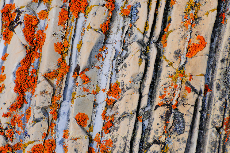 Colorful lichen growing on a boulder.