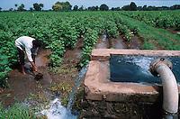 INDIEN Bewaesserung eines Baumwollfeldes im Maikaal Projekt im Narmadatal im Bundesstaat Madhya Pradesh / INDIA, Maikaal organic cotton project in Khargoan, Madhya Pradesh, irrigation of field