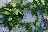 Efeu-Kranz, Efeukranz, Kranz aus Efeu, Efeuranken, Efeuranken werden zu einem Kranz gebunden, Blumenkranz, Efeu, Hedera helix, Common Ivy, Ivy, English Ivy, Lierre grimpant