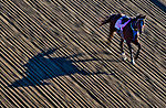 BALTIMORE, MD - MAY 15: A loose, riderless horse shuts down action as horses were exercising in preparation for the Preakness Stakes this week at Pimlico Race Course on May 15, 2017 in Baltimore, Maryland.(Photo by Scott Serio/Eclipse Sportswire/Getty Images)