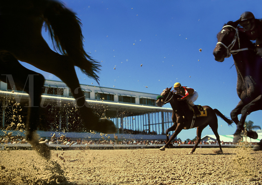 Thoroughbred horses gallop during a horse race.