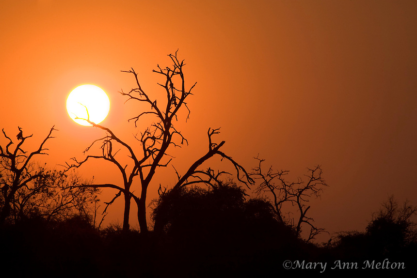 Sunset along the banks of the Chobi River, Capri Strip, Namibia