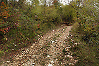 Sentiero nel bosco. Path in the woods.