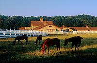 Horse farm, New Jersey<br />