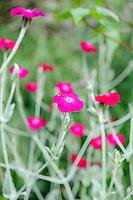 Special Plants, Derry Watkins - August
