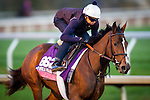 October 29, 2015:   Pricedtoperfection, trained by Chad C. Brown and owned by Klaravich Stables Inc  & William H. Lawrence, exercises in preparation for the Breeders' Cup Juvenile Fillies Turf at Keeneland Race Track in Lexington, Kentucky. Alex Evers/ESW/CSM