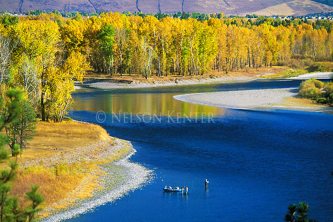 Yellow cottonwood trees line the shores of the Clark Fork River through the Missoula, Montana area as fishermen in a raft stop to fish a hole