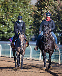 Miss Amulet, trained by Ken Condon, exercises in preparation for the Breeders' Cup Juvenile Fillies Turf at Keeneland 11.03.20.