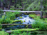 Clearwater Creek. Umpqua Natioanl Forest, Oregon