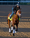 LOUISVILLE, KY - APRIL 28: Audible, trained by Todd Pletcher, exercises in preparation for the Kentucky Derby at Churchill Downs on April 28, 2018 in Louisville, Kentucky. (Photo by Scott Serio/Eclipse Sportswire/Getty Images)