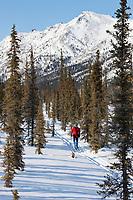 Cross country skiing near the Gates of the Arctic National Park, Arctic, Alaska.