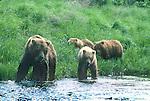 Wild Animals: Bear