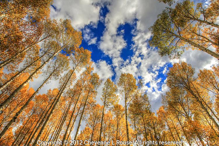 Aspen Forest - Arizona - Flagstaff