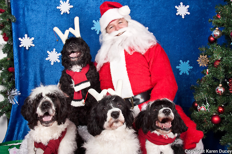 Dogs are photographed with Santa at a fundraiser for Dogs Deserve Better at Pet Pros in Redmond, WA on December 12, 2010. (photo by Karen Ducey)Diego, Roxie, Torrie, and Giselle, (not sure who is who)are photographed with Santa at a fundraiser for Dogs Deserve Better at Pet Pros in Redmond, WA on December 12, 2010. (photo by Karen Ducey)
