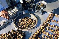 Europe/Turquie/Istanbul : Vendeur de marrons grillés au port d'Eminonu