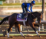 October 28, 2019 : Breeders' Cup Juvenile Fillies entrant Donna Veloce, trained by Simon Callaghan, exercises in preparation for the Breeders' Cup World Championships at Santa Anita Park in Arcadia, California on October 28, 2019. Carolyn Simancik/Eclipse Sportswire/Breeders' Cup/CSM