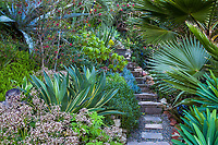 Southern California drought tolerant hillside garden with succulants and summer-dry plants - Jim Bishop and Scott Borden garden