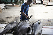 A worker checks the sustainably caught yellow fin tuna as it is received at the Casa, the Tuna buying house in Puerto Princesa, Palawan in the Philippines. <br /> Photo: Sanjit Das/Panos for Greenpeace