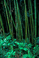 Green tropical bamboo forest