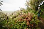 Image Ref: CA930<br /> Location: Bushrangers Bay Track<br /> Date of Shot: 07.09.19