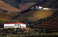 vineyards quinta velha apegadas douro portugal