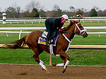 November 1, 2020: Point Of Honor, trained by trainer George Weaver, exercises in preparation for the Breeders' Cup Distaff at Keeneland Racetrack in Lexington, Kentucky on November 1, 2020. Karina Serio/Eclipse Sportswire/Breeders Cup /CSM