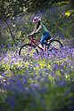 24/04/17<br /> <br /> Freya Kirkpatrick rides her bicycle along a path through a stunning carpet of bluebells in Bow Wood near Matlock, Derbyshire.<br /> <br /> All Rights Reserved F Stop Press Ltd. (0)1773 550665 www.fstoppress.com