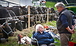 """An elderly Swiss couple sits next to cows during Queen Fight tournament in the village of Villarlod in the Fribourg Canton Saturday  April 26,  2014.  Each year, a series of cow fights known as combats de reines (""""queen fights""""), which began in the 1920s are held in Swiss villages. The winner is called La Reine des Reines (""""the queen of queens""""). Once a year, a grand final is held in Aproz, where the six best from seven districts do battle in six weight categories. Photo by Eyal Warshavsky"""