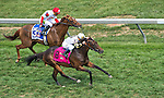 MAY 16, 2015: Watsdachances wins the Stella Artois Gallorette with Javier Castellano aboard  at Pimlico Race Course in Baltimore, Maryland. John Voorhees/ESW/Cal Sport Media
