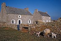 Europe/France/Bretagne/29/Finistère/Ile d'Ouessant/Ecomusée de Niou: Maison des techniques et traditions ouessantines et moutons ouessantins