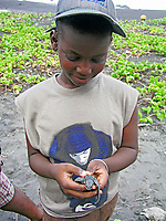young local children learn about conservation efforts for leatherback sea turtle hatchlings, Dermochelys coriacea, Dominica, Caribbean, Atlantic