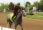 LOUISVILLE, KY - APRIL 28: Lani (Tapit x Heavenly Romance, by Sunday Silence) exercises at  Churchill Downs, Louisville KY in preparation for the Kentucky Derby. Owner Ms. Yoko Maeda, trainer Mikio Matsunaga. (Photo by Mary M. Meek/Eclipse Sportswire/Getty Images)