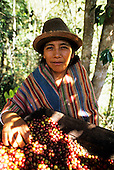 San Juan del Oro, Peru. Woman processing coffee.