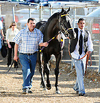 16 APR - Archarcharch heads to the track before winning the 75th Running of THE ARKANSAS DERBY at Oaklawn Park in Hot Springs, Arkansas.