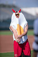 "Scottsdale Scorpions pitcher Jake Ehret (81), of the Cincinnati Reds organization, stretches in his ""Deviled Egg"" costume prior to an Arizona Fall League game against the Glendale Desert Dogs on October 31, 2017 at Scottsdale Stadium in Scottsdale, Arizona. The Scorpions defeated the Desert Dogs 6-2. (Zachary Lucy/Four Seam Images)"