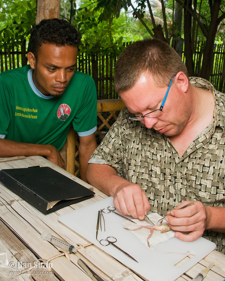 American herpetologist Hinrich Kaiser and Timorese student Luis Lemos prepare specimens at their makeshift research station at Tua Koin Resort, Atauro Island, Timor-Leste (East Timor)